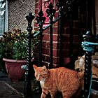 Feline Meanderings by Loren Goldenberg-Kosbab