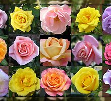 Gallery of Roses by kathrynsgallery