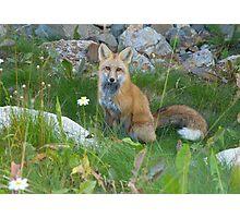 September - Friendly Fox. Photographic Print