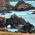 California Cows by GreenSaint