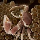 Crab by Fatfish Photography