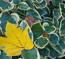 autumn colors by TOM KLAUSZ