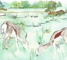 Sketching in the Game Reserve - Impala by Maree Clarkson