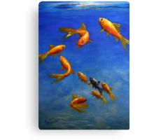 Feng Shui Fish Canvas Print