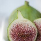 Fig resize 1 by Sandy  Taylor Photography