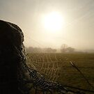 Morning Mist by Vicki Spindler (VHS Photography)