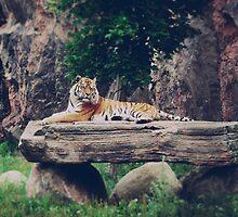 Tiger, tiger - numero deux., by subtitulo