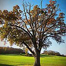 Another tree in Autumn, Somerset, UK by buttonpresser