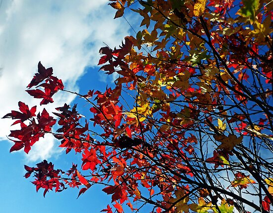 The leaves on the trees by Roxy J