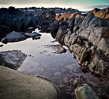 Rockpool by Chris Cardwell