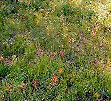 Alpine Meadow II by Harry Oldmeadow
