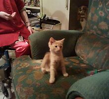 Theo, Philippe's new kitty by Mike Dineen
