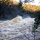 Launceston Gorge in Flood by Nicole  Hastings