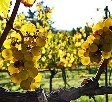 Yellow On The Vine by LadyEloise