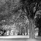 Avenue of Trees in the Phoenix Park, Dublin by Dave  Kennedy