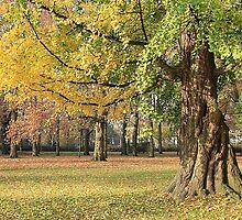 Hogelandsepark, Utrecht by Stephanie Owen