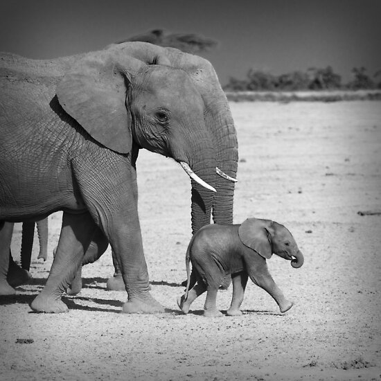 Elephant's family by javarman