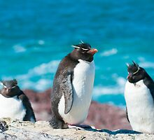 rockhopper penguins by javarman