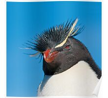rockhopper penguin Poster