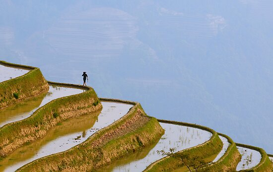 Rice terraces of Yuanyang,  Yunnan, China by javarman