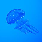 Blue jellyfish by javarman