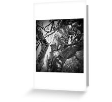Leopard eating impala Greeting Card