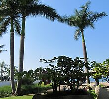 Siamese palm twins - palmas como gémelos siameses, Puerto Vallarta, Mexico by PtoVallartaMex