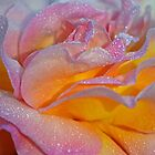 Morning Dew Rose by gmws