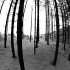 Newborough Trees by RH-prints
