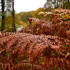 Autumnal Fern by SparklesDarkly
