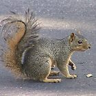 May I have more nuts please? by Nicole Besch
