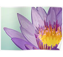 Flower of lotus Poster