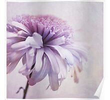 dainty daisy Poster
