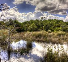 Hammock — Florida Everglades by njordphoto