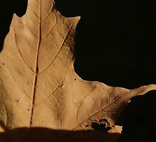 Leaf by cudatron