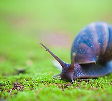 Snail on Moss by Tim Cowley