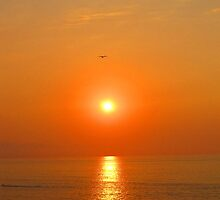 A Bird in the setting Sun - Un pájaro en el Sol, Puerto Vallarta, Mexico by PtoVallartaMex