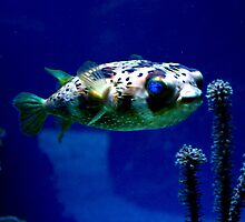 balloonfish by wistine