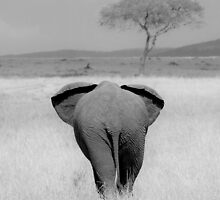 Elephant, rear view by javarman