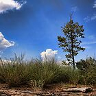 Tree On The Hill by Carolyn  Fletcher