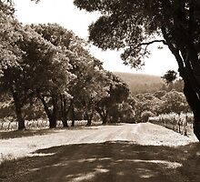 Country Roads by LadyEloise