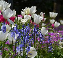 Flowering bulbs by Deborah Clearwater