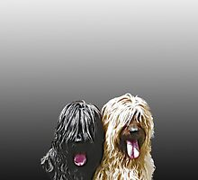 Black & Fawn Briard iPhone Case by BriardRescue