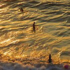Playing in an ocean of gold - jugando en un oceanó de oro, Puerto Vallarta, Mexico by PtoVallartaMex