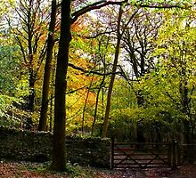 arnside beeches by Ilapin