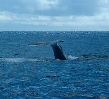 Whale dive by QuarryHeight