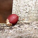 Berry by Elisabeth Dubois