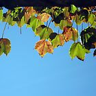 Sunning Autumn Leaves by Arlene Zapata