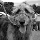 Wolfhound by claireh