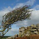 Helman Tor...Bodmin Moor, Cornwall. by greenstone